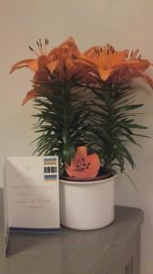 Fina blomman vi fick av Monika & Therese!